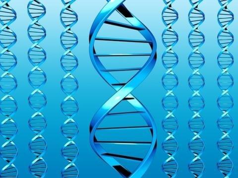 Модел на човешкия геном