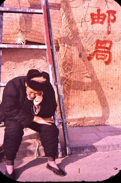 Възрастен пекинец