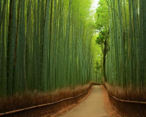 Снимка: Japanspecialist.co.uk