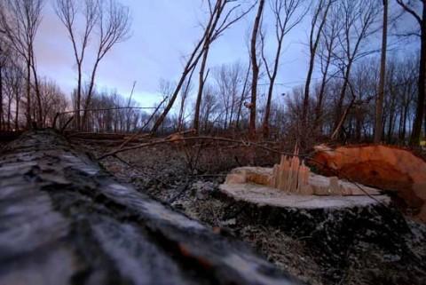Незаконно сечище край коритото на река. Снимка: Булфото