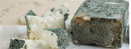 """За да опитате зеленото сирене от Черни Вит, трябва да отидете на специална дегустация. Снимка: в. """"Труд"""""""
