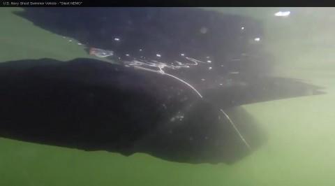 Снимка: Скрийншот от видео, качено в You Tube