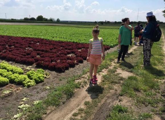 Краси Тихова разказва за българското зеленчукопроизводство в Унгария, спечелило доброто име на българите тук