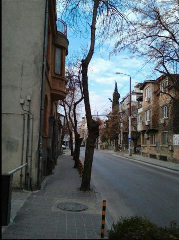 """Състояние на дърветата по ул.""""Цар Асен"""", с по един клон!"""