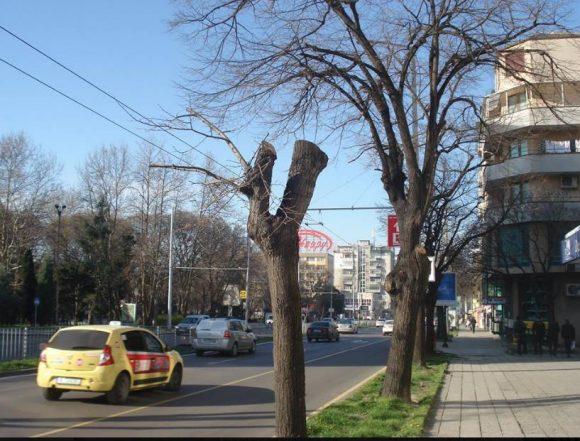 """""""Белите дробове"""" на Варна!"""