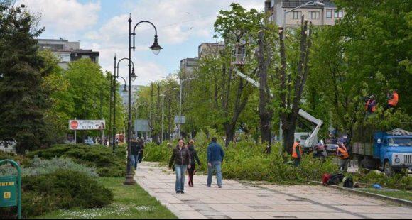 Рязането на кестените пред сградата на общината! Края на април или началото на май беше, личи по листната маса!