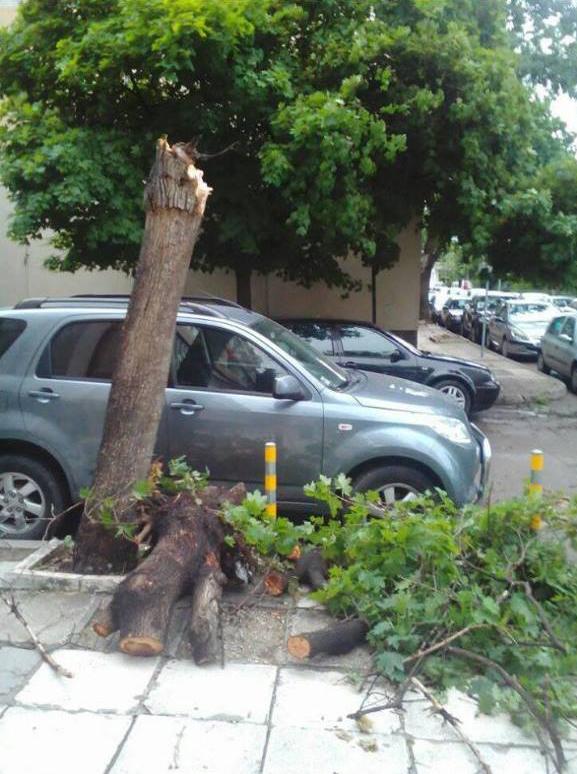 Сухите и опасни дървета не се режат!Чака се да паднат в повечето случаи и на тяхво място не се сади нищо!
